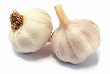 กระเทียม (Garlic)