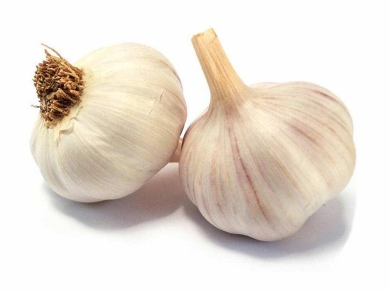 กระเทียม (Garlic) เครื่องเทศ
