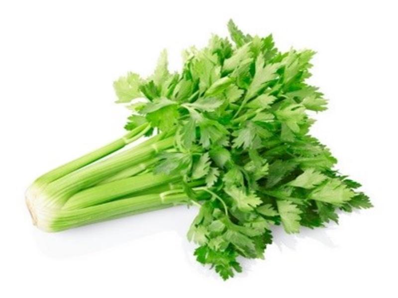 ขึ้นฉ่าย (Celery) เครื่องเทศ